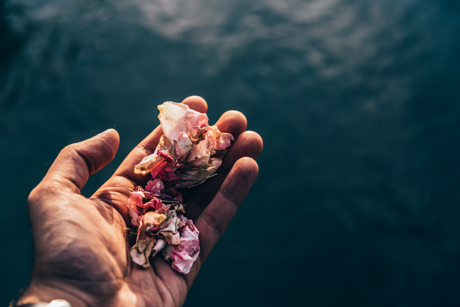 Petals for the Water by Krish Bhalla on 500px.com