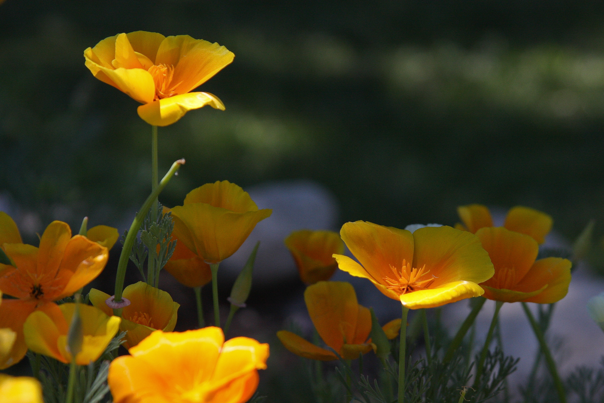Photograph Poppies by Kerry Erington on 500px