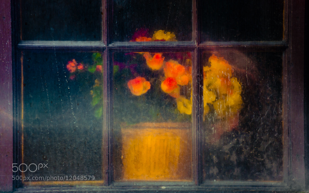 Photograph Flower Pot thru Plastic covered Window 1 of 3 by Orlin Bertsch on 500px