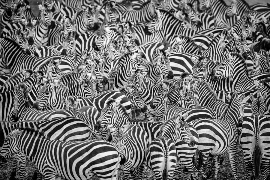 Photograph Where's Waldo? by Stephen Oachs on 500px