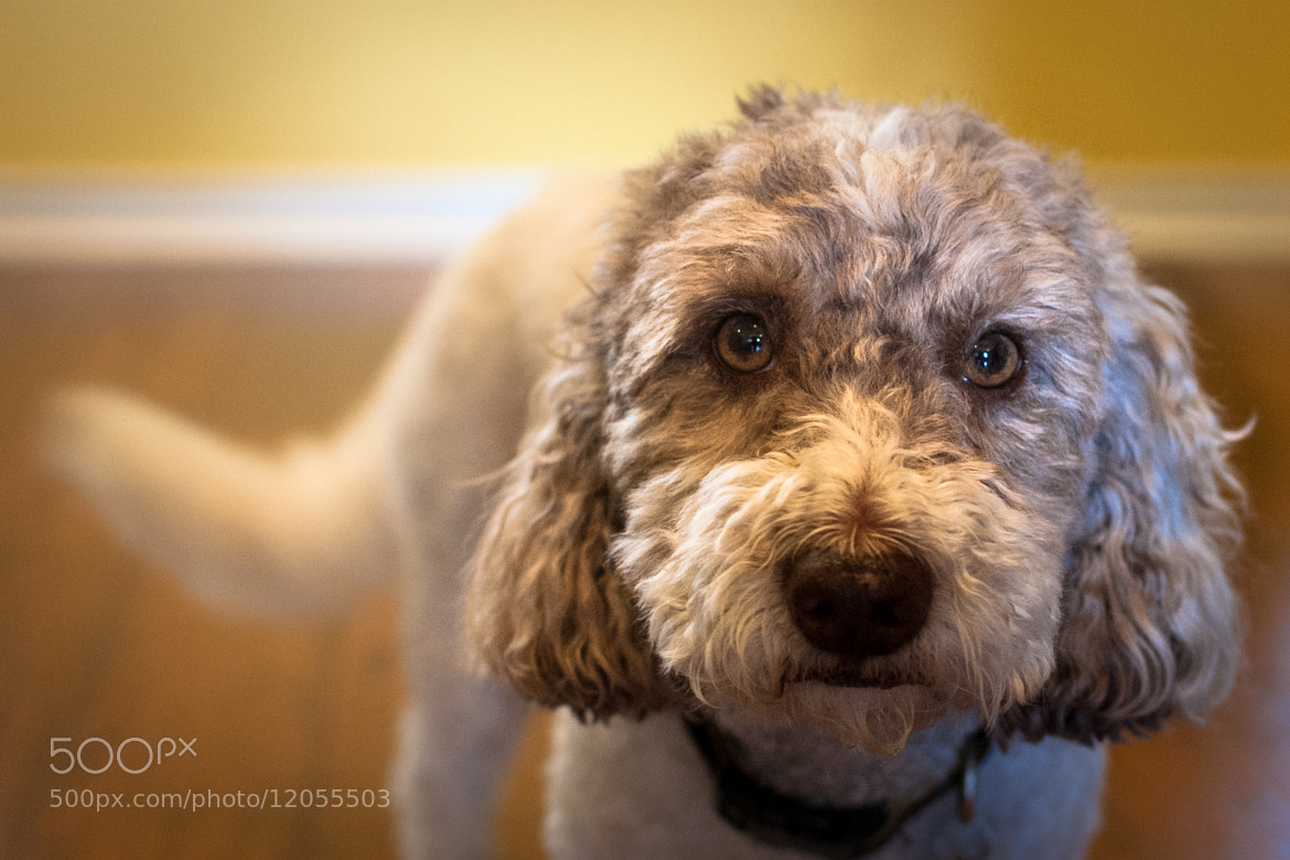 Photograph Sammy by Pratik  on 500px