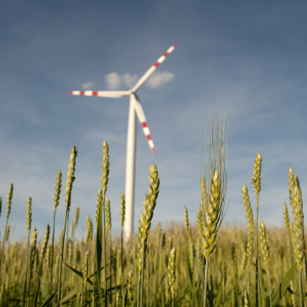 Windmill in a Cornfield