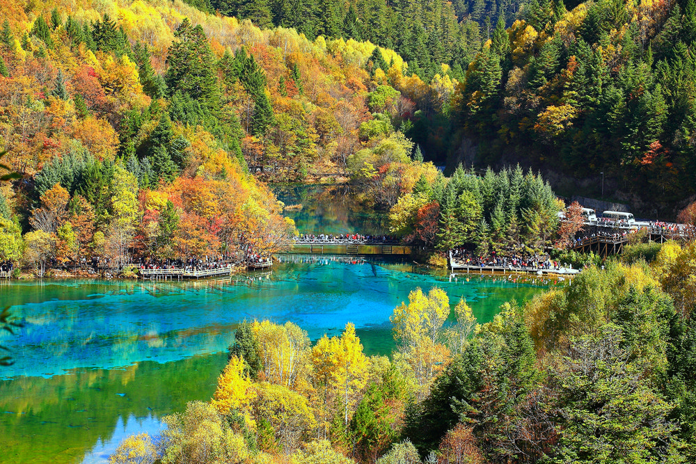 Photograph Autumn by Viet Hung on 500px