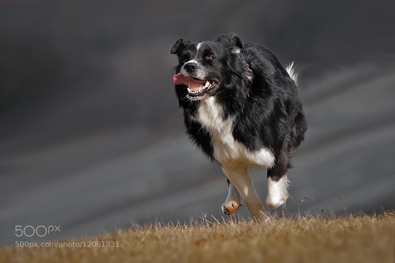 Photograph (grey)-hound .-)) by Mathias Ahrens on 500px