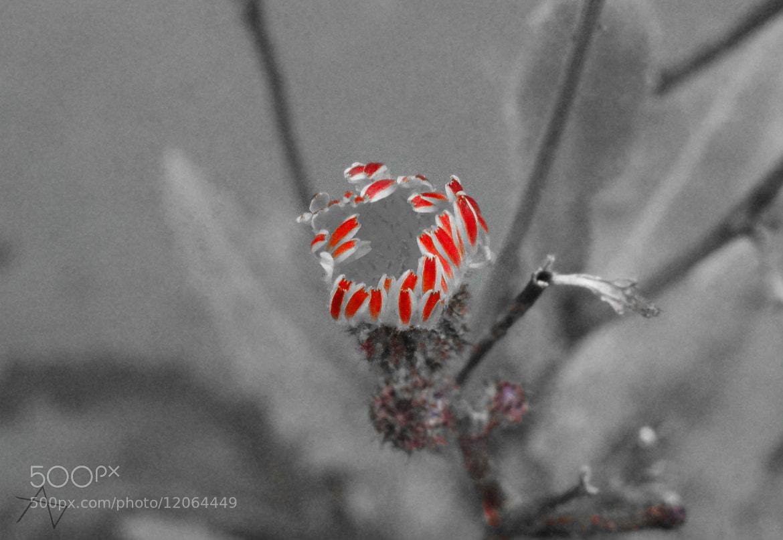 Photograph petals by ajinkya dixit on 500px
