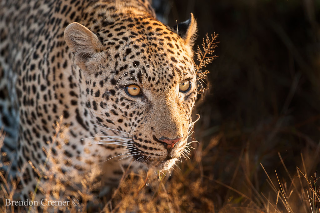 Photograph Lamuna by Brendon Cremer on 500px