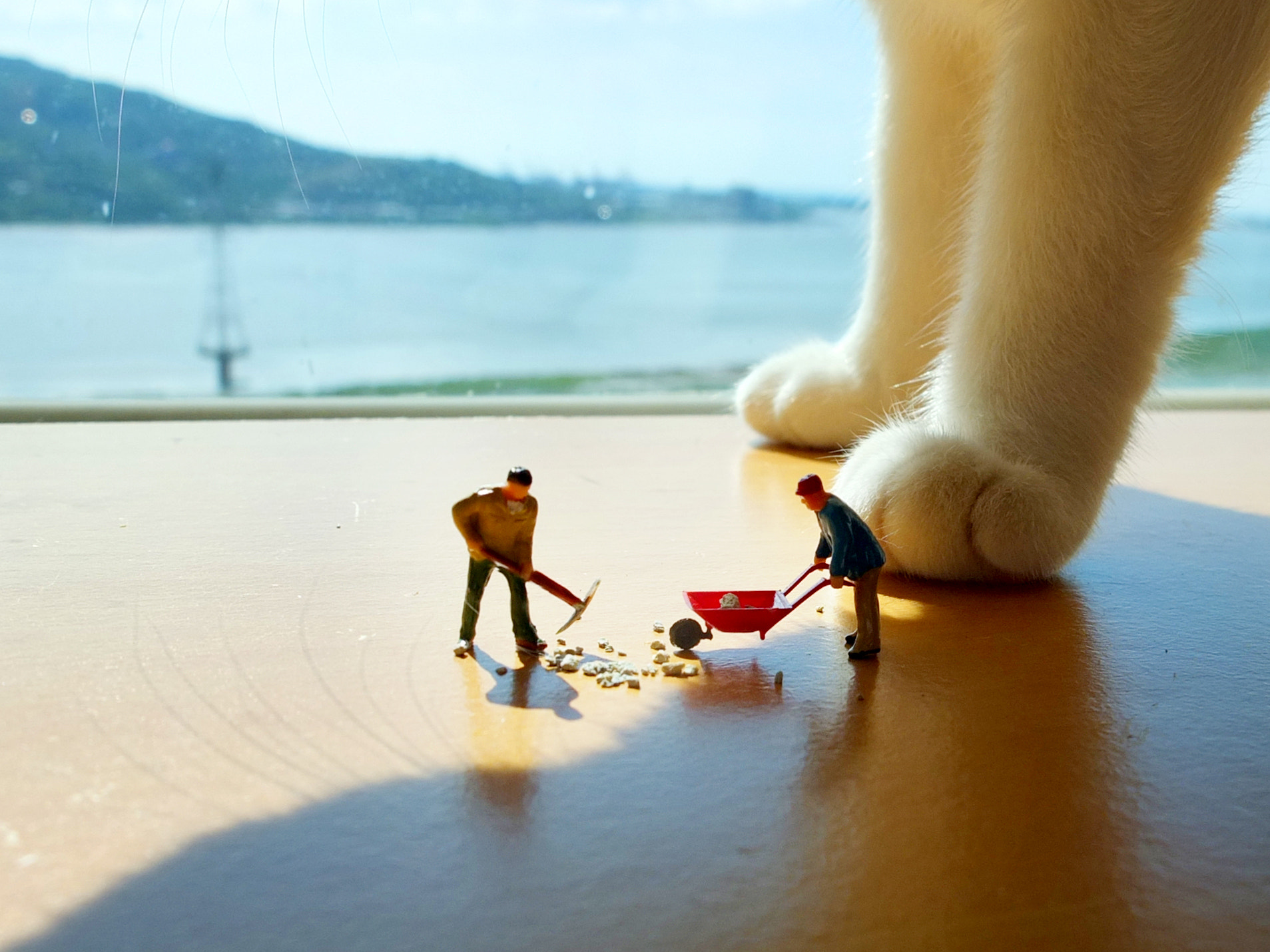 Photograph Miniature cleaning cat litter by Emily C on 500px