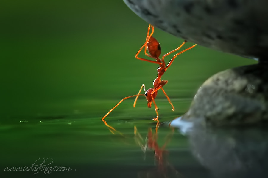 Photograph Magic of Nature by Uda Dennie on 500px