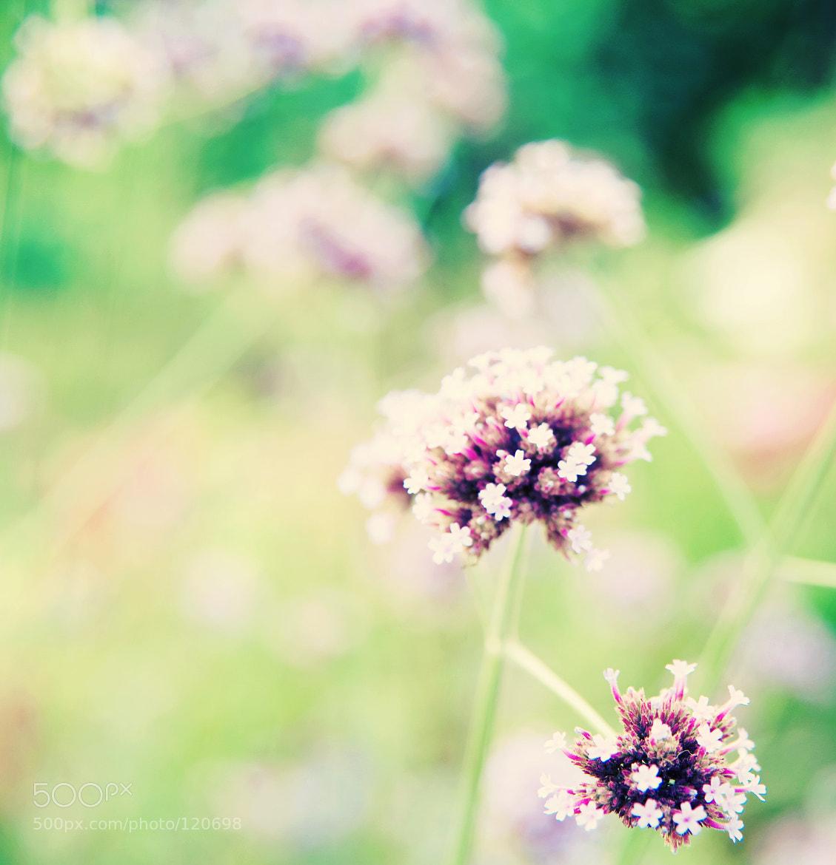 Photograph August... by Aleksandra Loginova on 500px