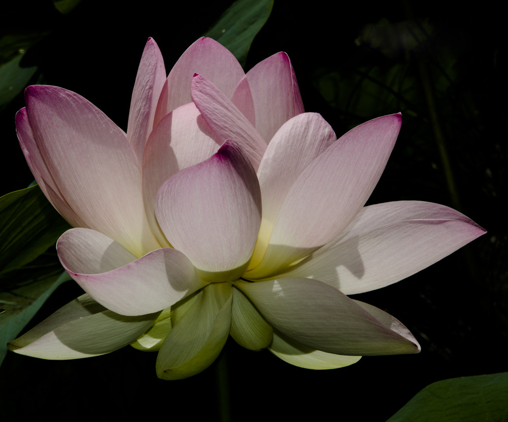 Photograph LOTUS by Giusy Baffi on 500px