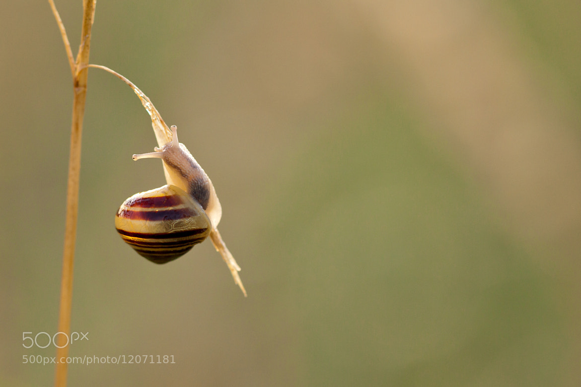 Photograph Snail by Thomas Forysiak on 500px