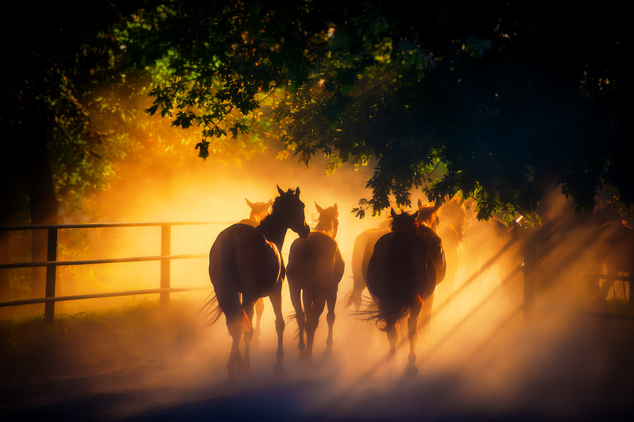 A herd of horses back. by Andriy Solovyov on 500px.com