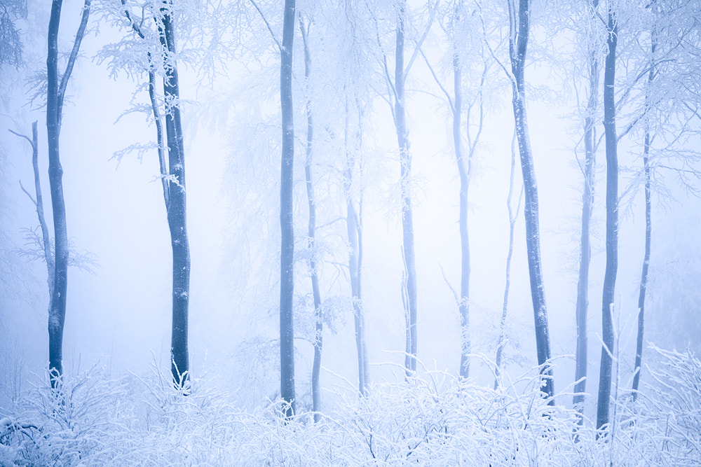 Photograph cold forest by Stephan Amm on 500px