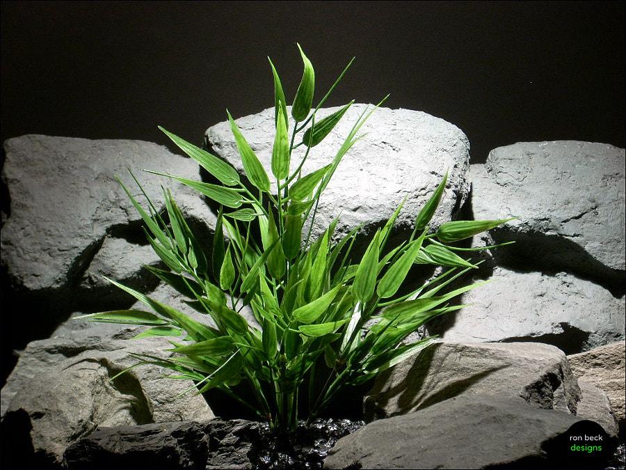 Пластиковые аквариумные растения
