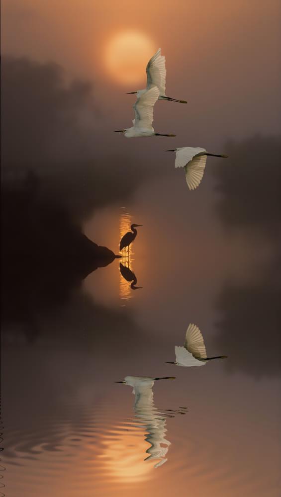 DREAM By Nasser Osman / 500px