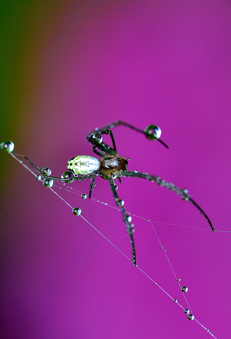 Photograph ...Spider.... by Bu Balus on 500px