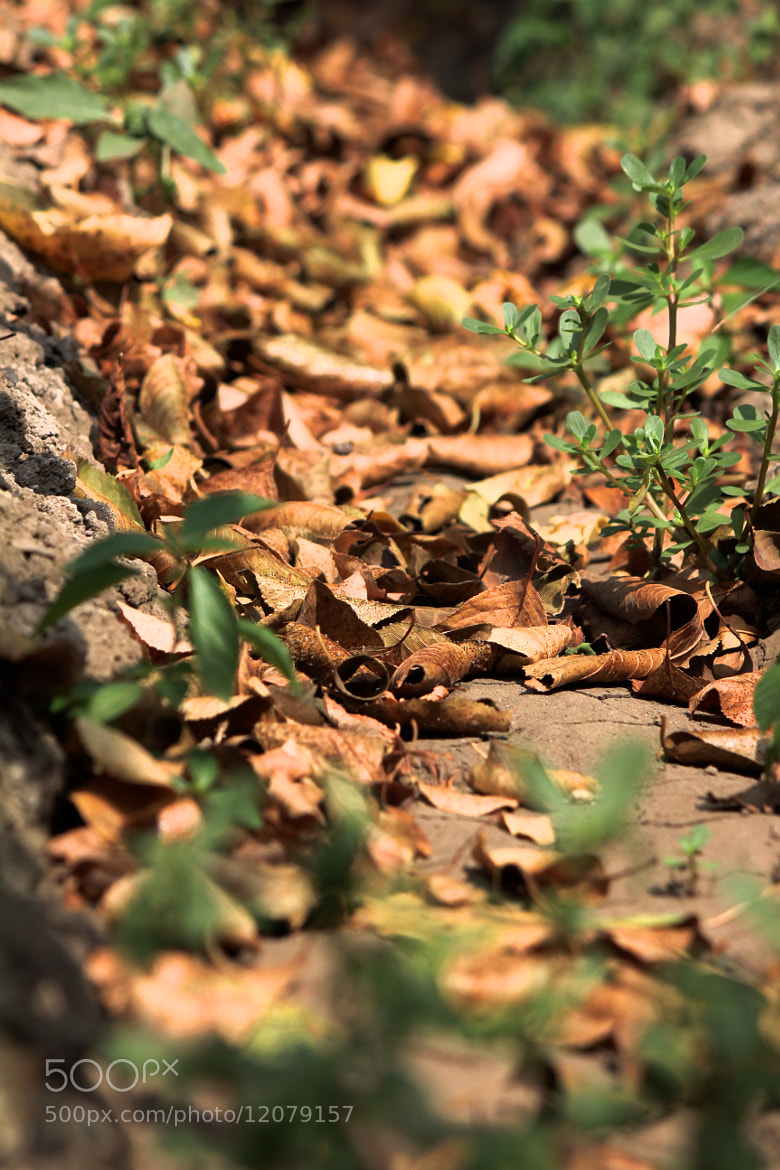 Photograph Leaves by Ali Samedov on 500px