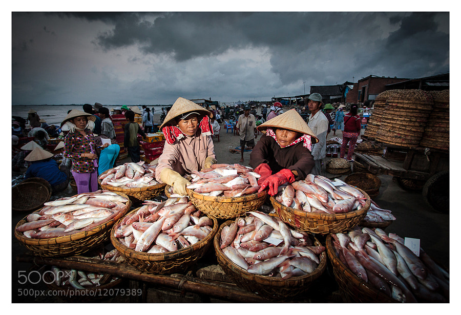 Photograph Fresh fish for market by Peter Pham on 500px