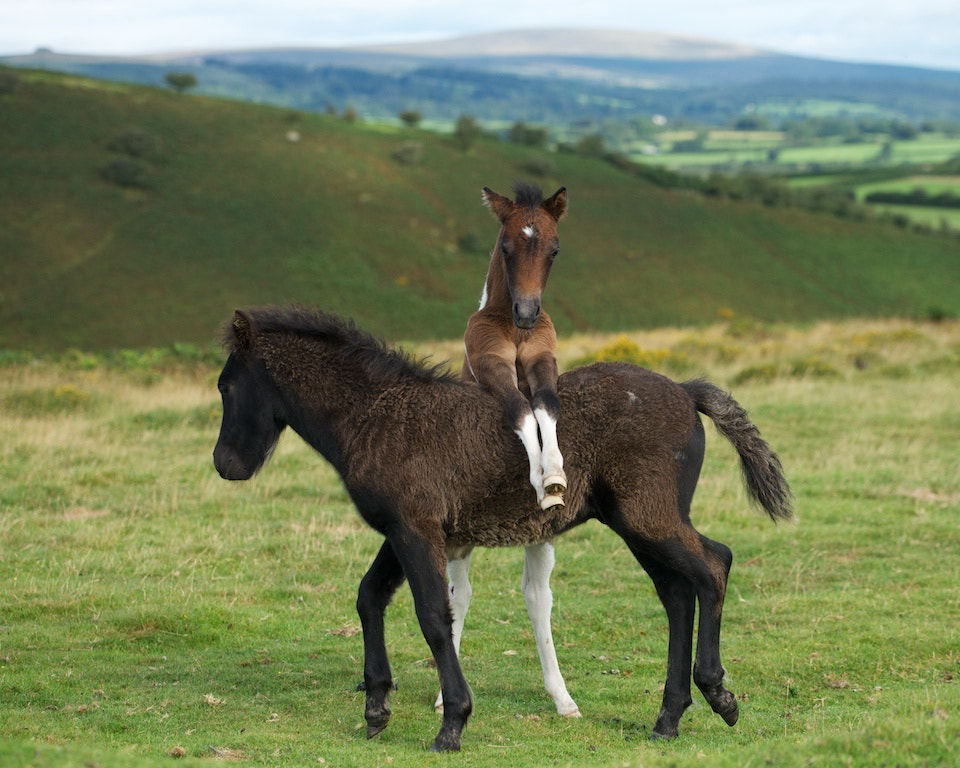 Photograph Foals by duncan george on 500px