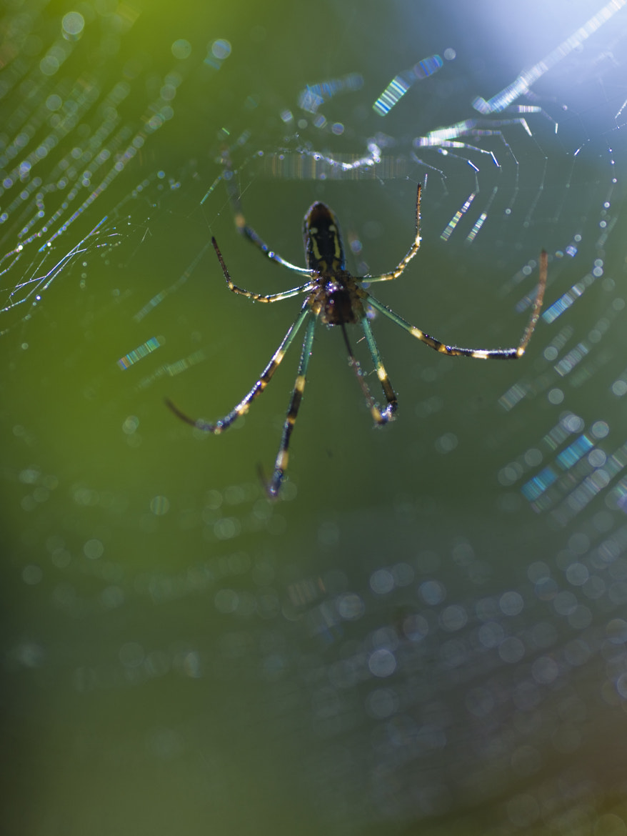 Photograph Spider by polo tan on 500px