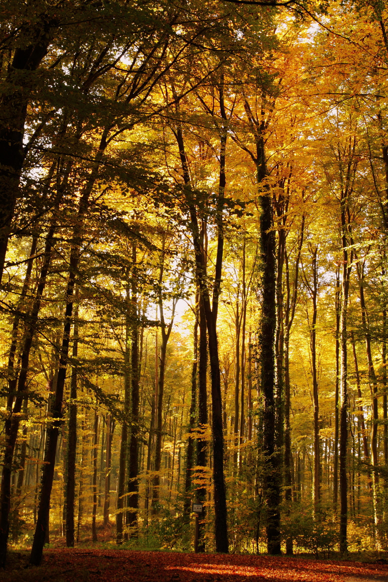Photograph Autumn Forest by Philipp K on 500px