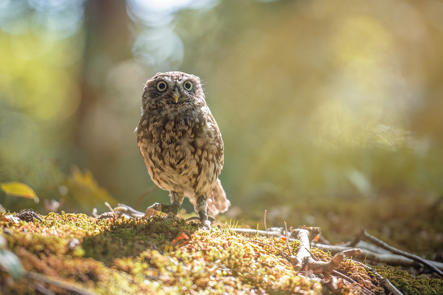 Forest-Sun by Tanja Brandt on 500px.com