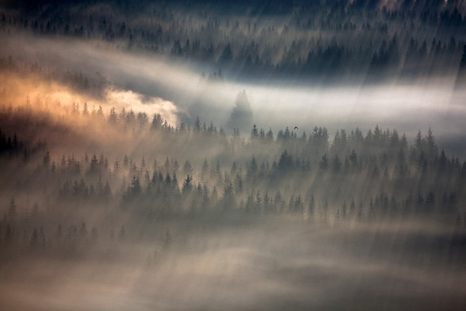 Photograph Raven by Marcin Sobas on 500px