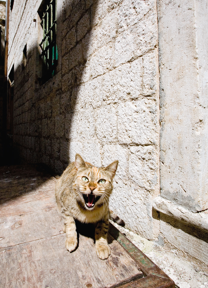 Photograph Cat in Perast by Sergey Bugrov on 500px