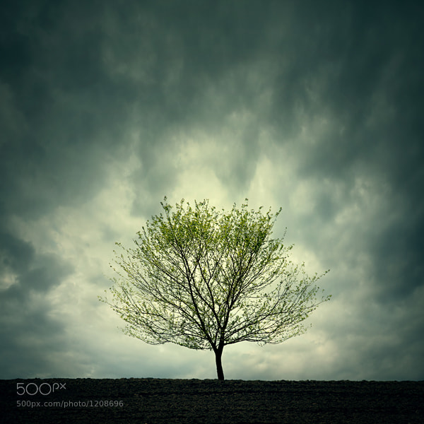 Photograph Tree by Zoltan Toth on 500px