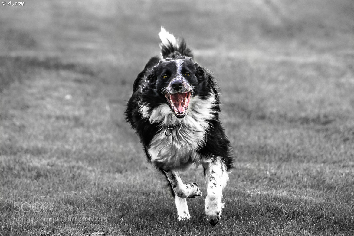 Photograph Runner! by Óli Magg on 500px