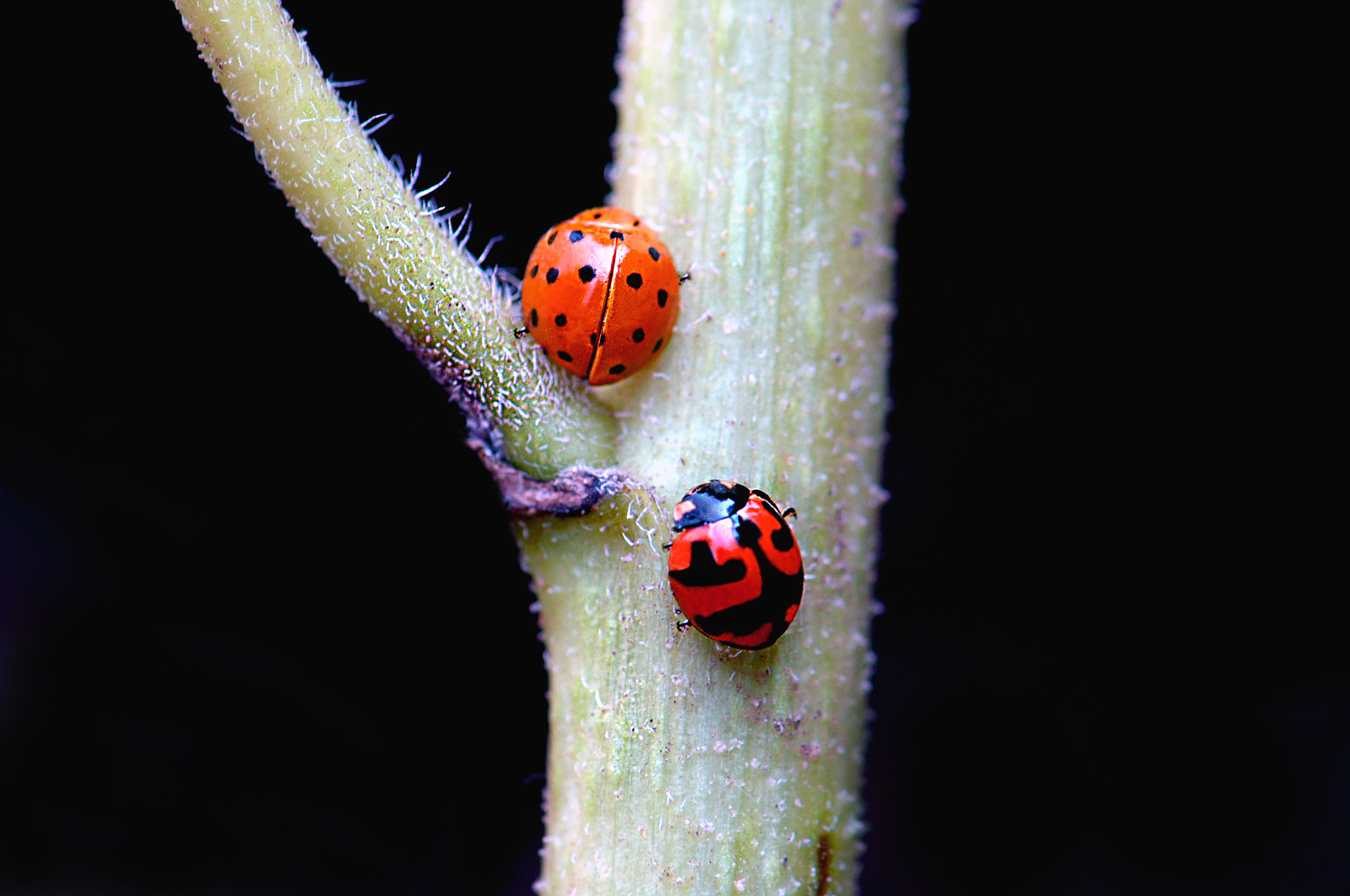 Photograph mrs. spot & mrs. polka by lilie 59 on 500px