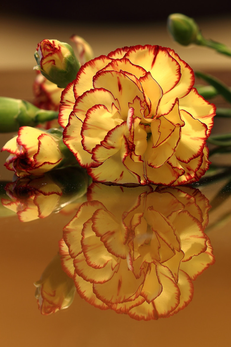 Photograph Flower Reflection 3 by John Velocci on 500px