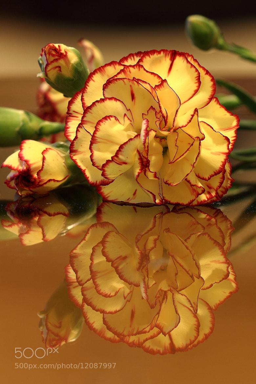 Photograph Flower Reflection 3 by John Velocci on 500px