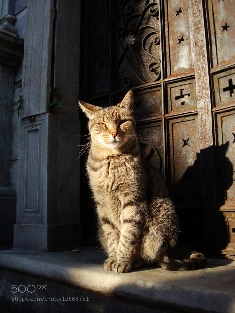 Photograph cat by Hugo Desch on 500px