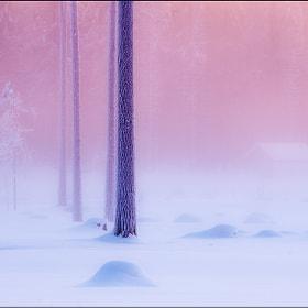 Домик лешего (house forest spirit) by Анатолий Соколов(Anatoly Sokolov) (Falconsa) on 500px.com