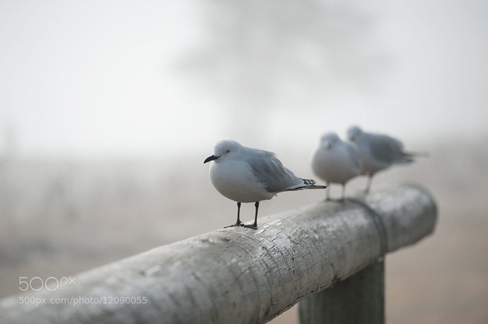 Photograph Cold Morning by Mieke Suharini on 500px