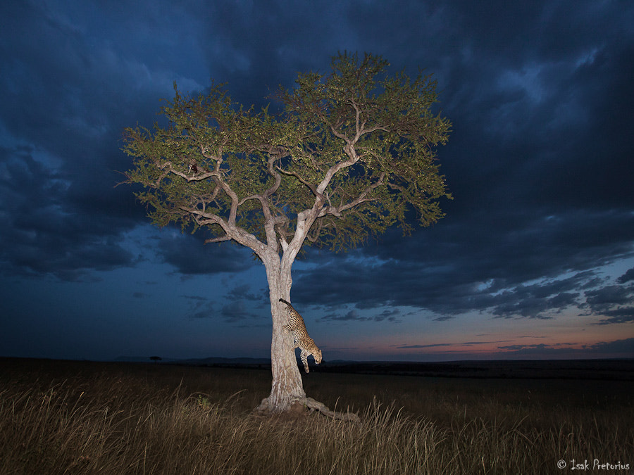 Photograph Getting out by Isak Pretorius on 500px