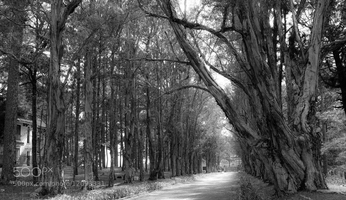Photograph old trees by love leica on 500px