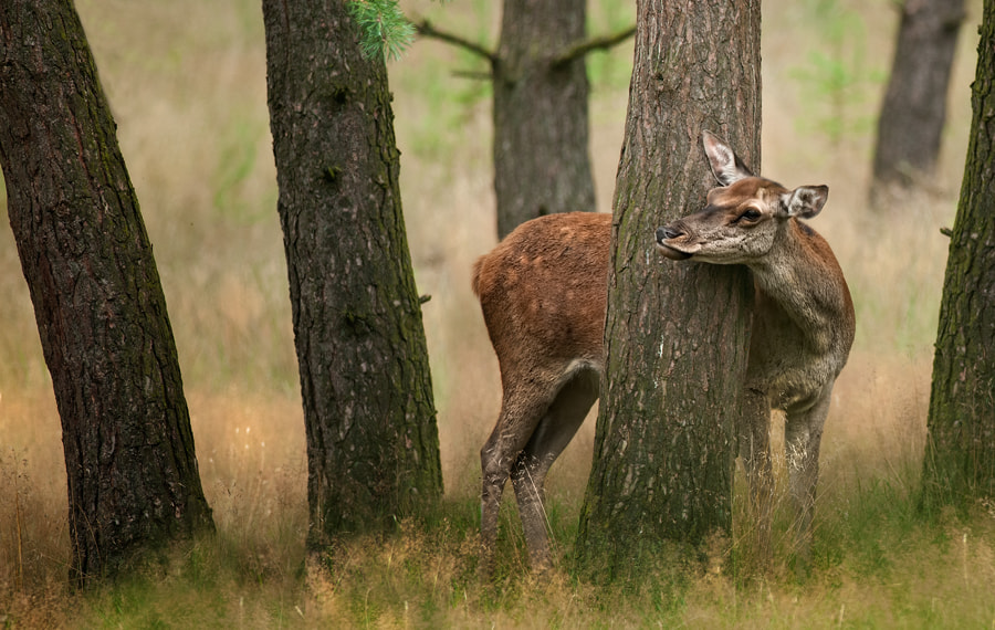 Photograph Hide And Seek by Jeannette  Oerlemans on 500px