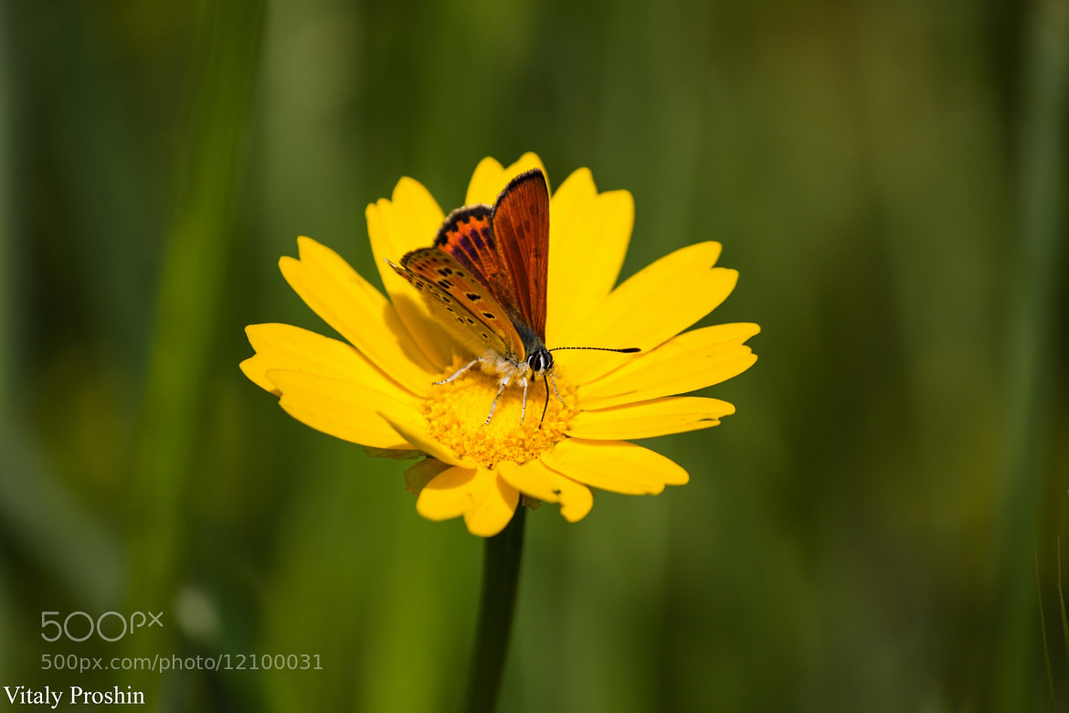 Photograph Butterfly by Vitaly Proshin on 500px