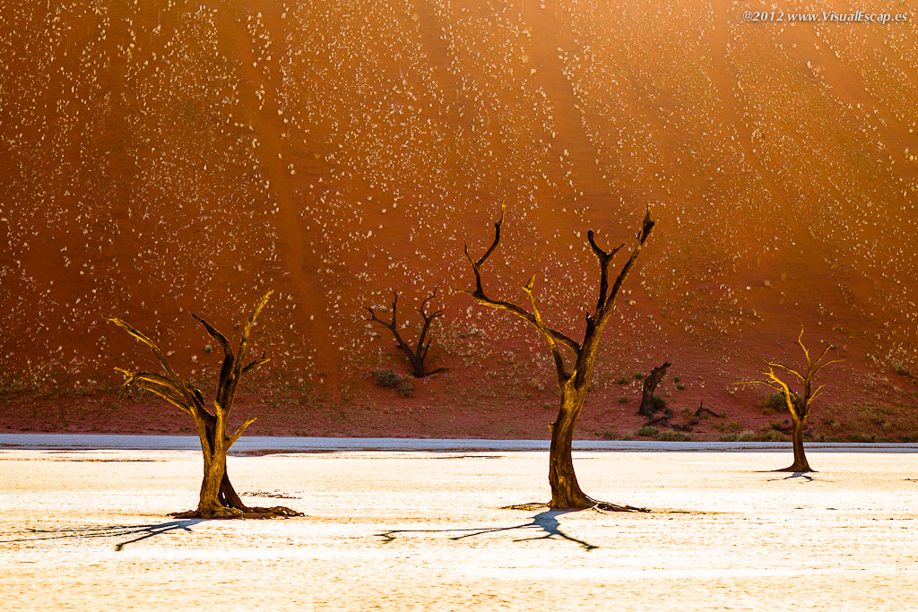 Photograph The Three Musketeers ~ Namibia by Martin Sojka on 500px