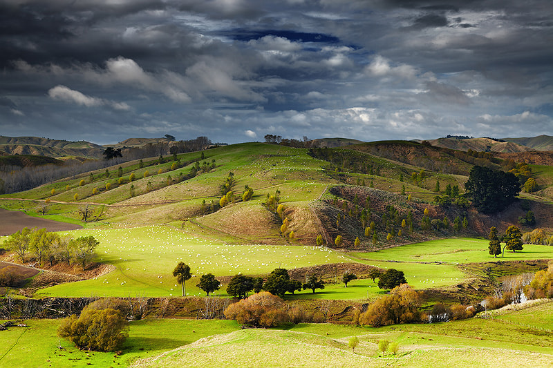 New Zealand landscape, North Island by Dmitry Pichugin