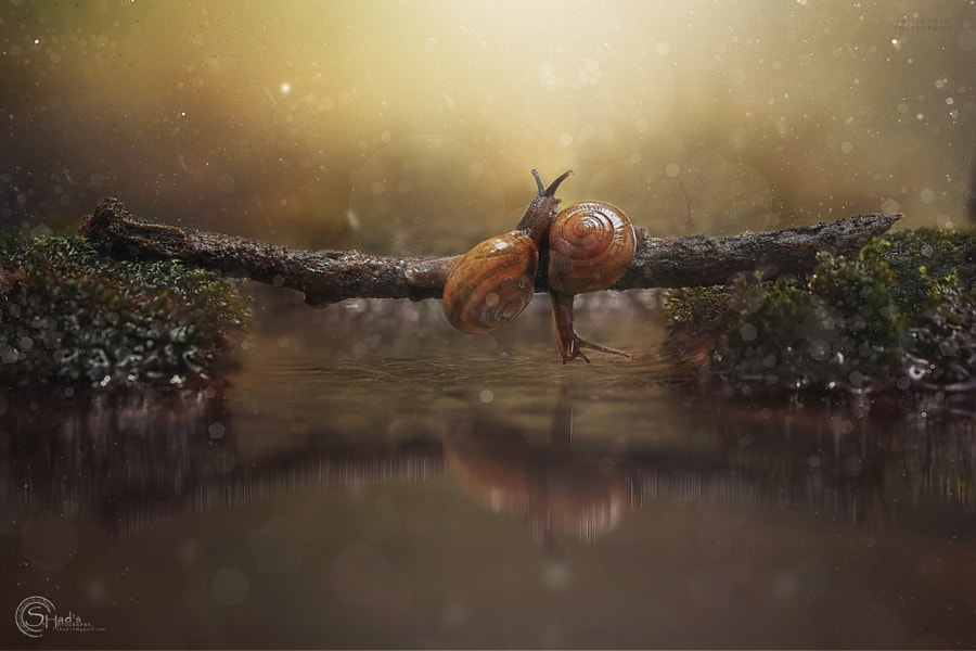 Snails by i.h.shad on 500px.com