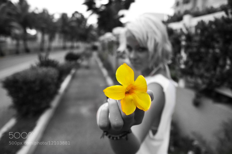 Photograph Flower by Zach Becker on 500px