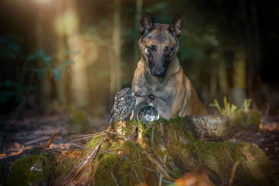 The ghosts, I called ....... by Tanja Brandt on 500px.com
