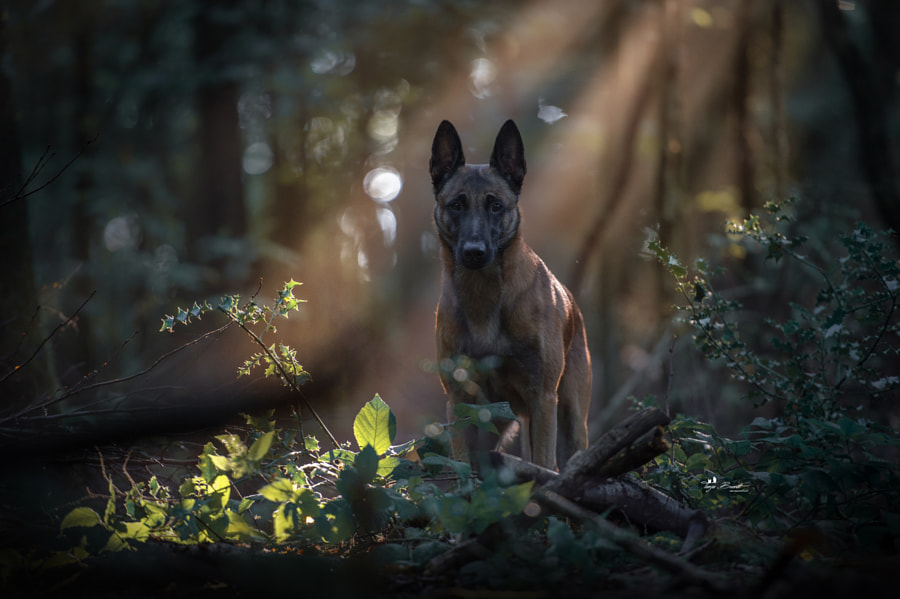 The ghost of the forest by Tanja Brandt on 500px.com