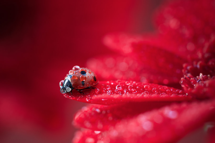 red by Kasia Hemery on 500px.com