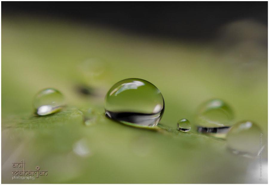 Drop by Anil Maharjan / 500px | @500px