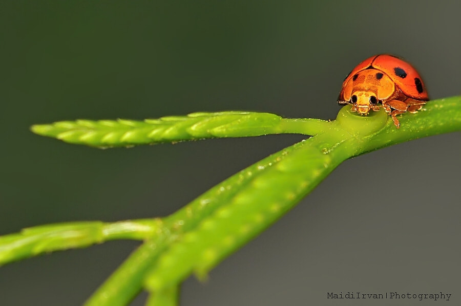 Photograph pretty little lady by Maidi Irvan on 500px