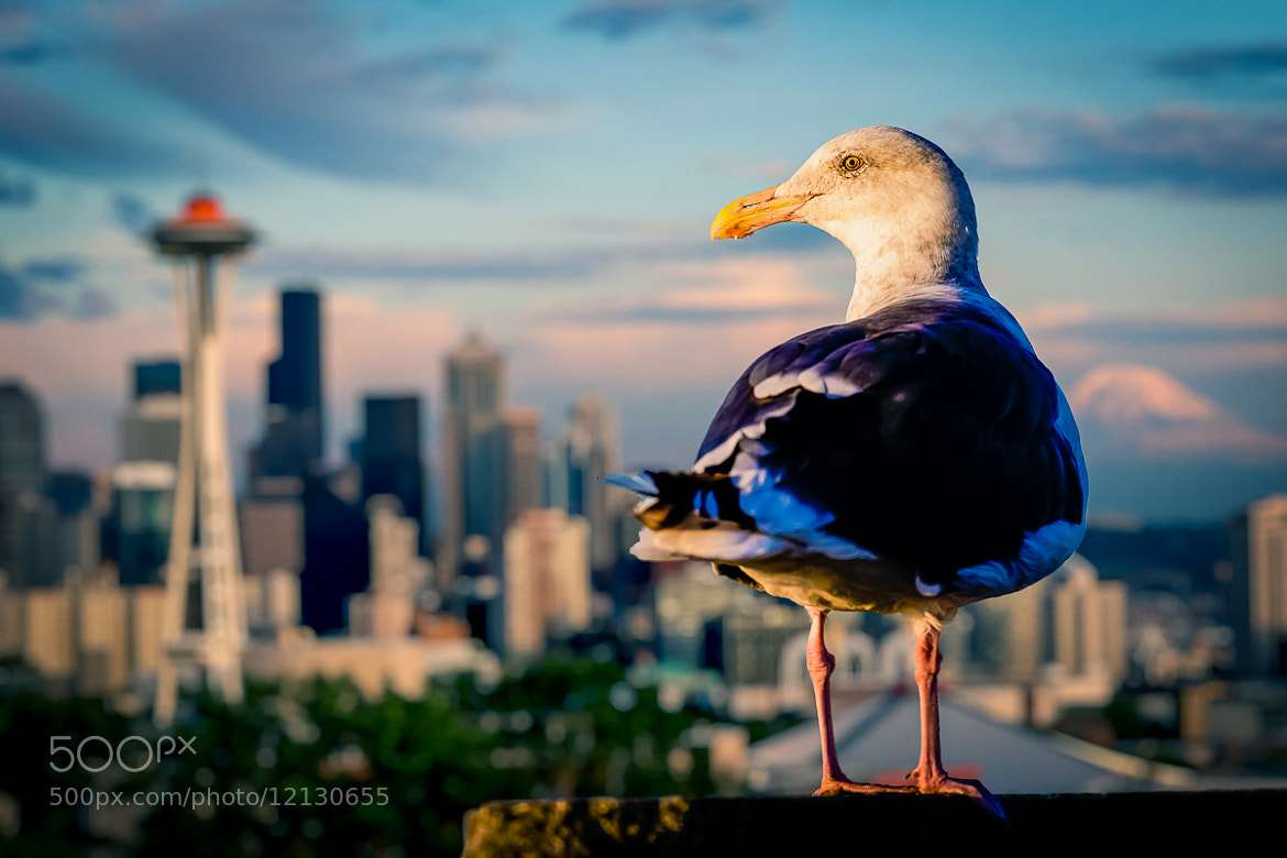 Photograph Seagull in Seattle by Nicole S. Young on 500px